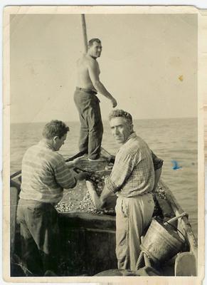 Foto storica CoGeVo Venezia, la raccolta delle vongole